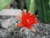 Kakteen / Cacti